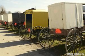 buggy-row