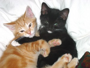 Two kittens hugging